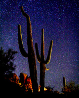 Sonoran Stary Night (single image)