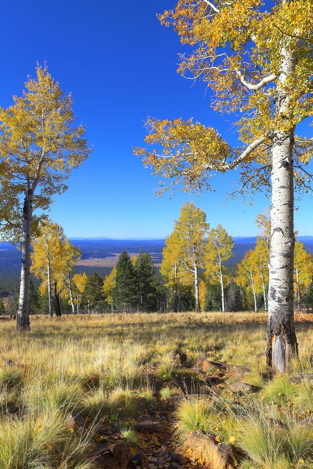 Autumn On The Kachina Trail