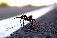 Wild Arachnids & Insects Of The West - Southwest Wildlife Photography Limited Edition Fine Art Prints