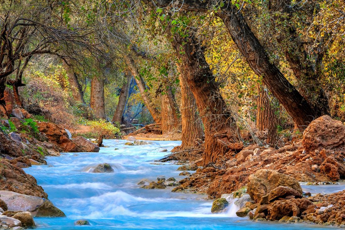 Autumn On Havasu Creek
