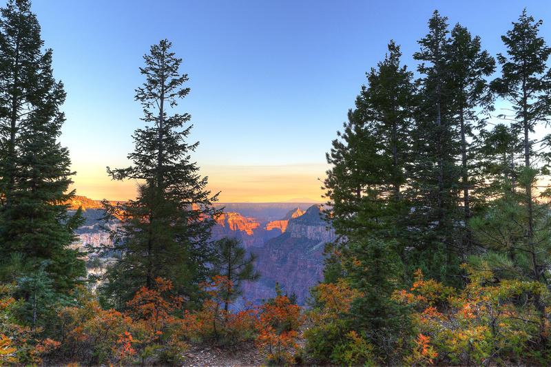 Widforss Autumn Sunset