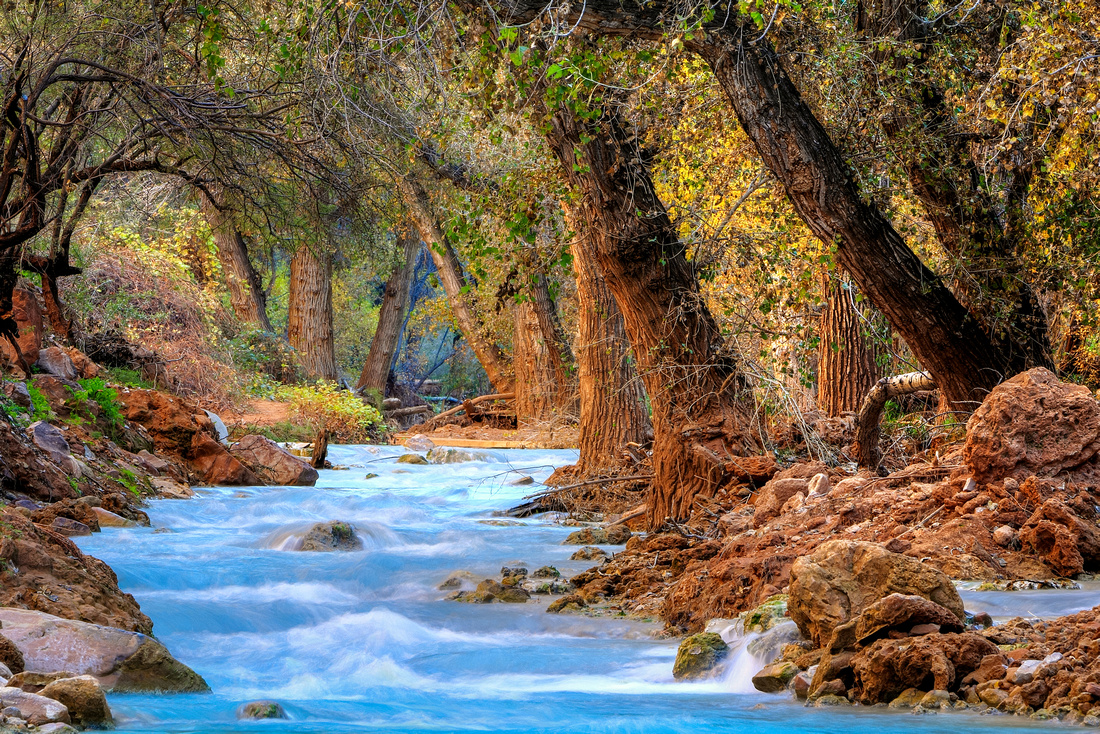 Autumn On Havasu Creek